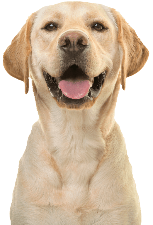 Your Pet's Vets picture of a smiling dog looking at the camera.